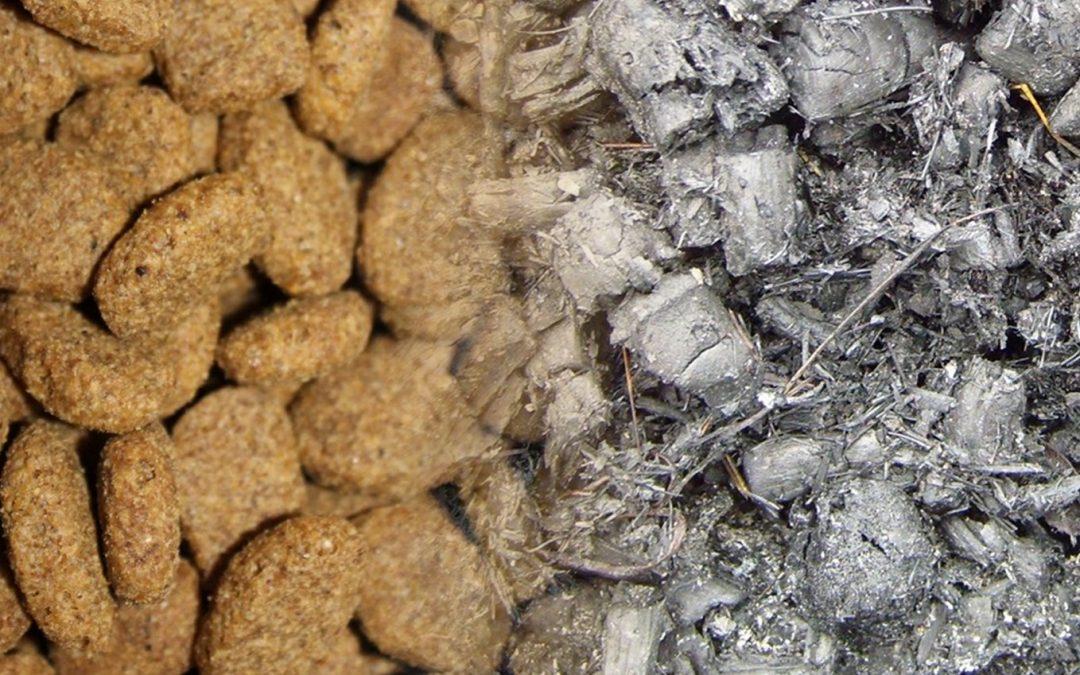 Ceneri nei croccantini per cani e gatti: cosa sono e cosa ci dicono sulla qualità dell'alimento?