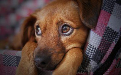 Diarrea nel cane e nel gatto: perché le feci diventano liquide e cosa fare (o non fare) quando succede